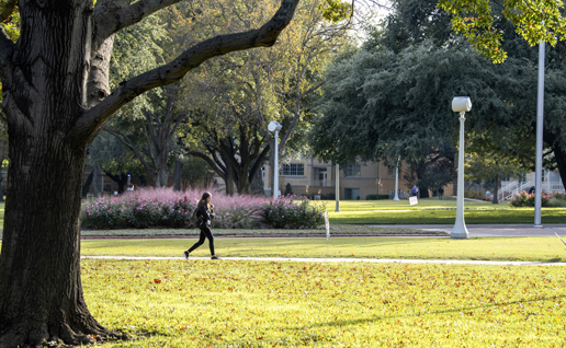 A student walks to class past sunlit purple sage