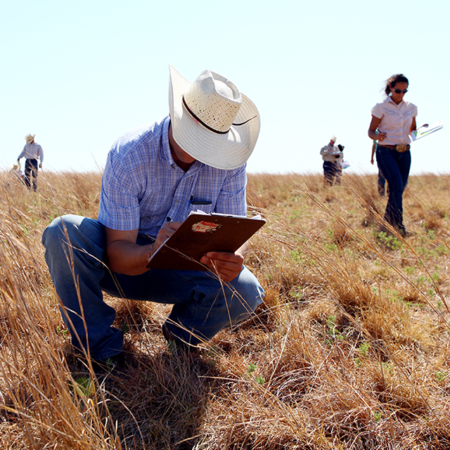 A Ranch Management student examines pasture grass while his classmates do the same in the background.