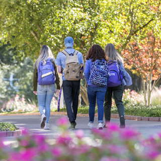 Four students walk past campus landscaping