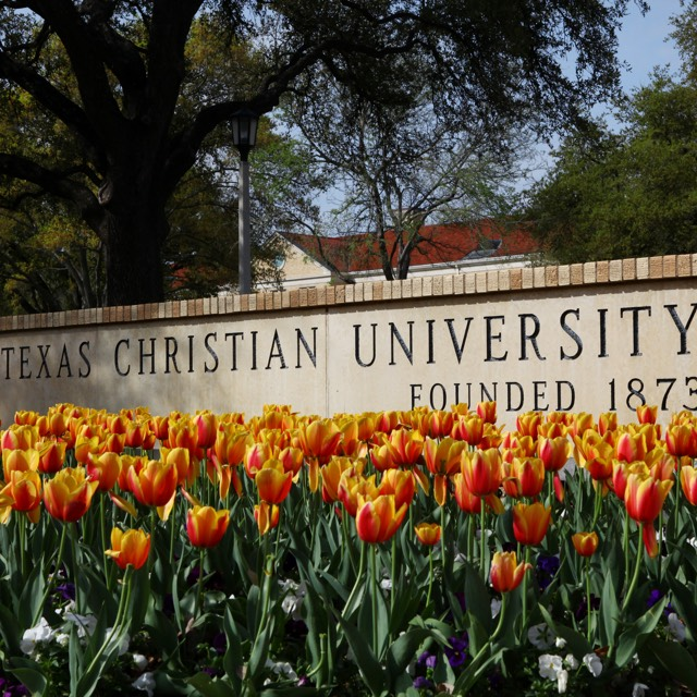 Tulips in front of Texas Christian University